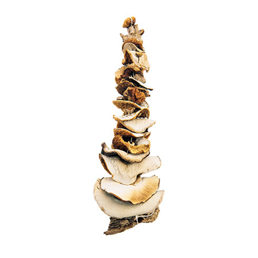 Imported Dry Mushrooms